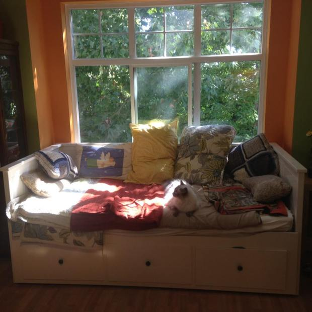 cat-on-daybed